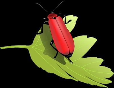 roter Käfer auf einem Blatt